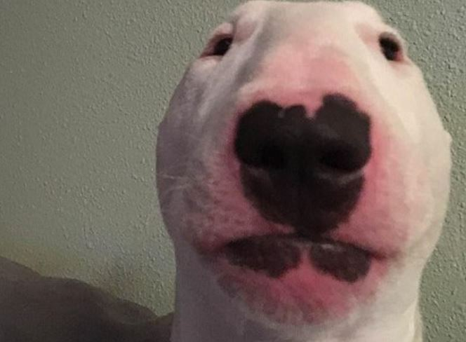 Walter Dog was dead